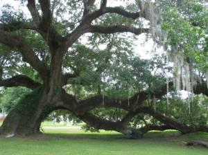 great-oak-mag