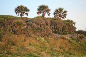 Palms and dunes on Edisto Island