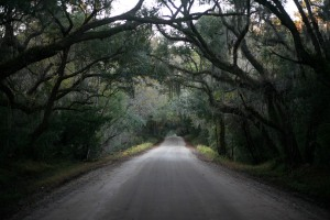 Botany Bay Road in Winter, Edisto Island, SC