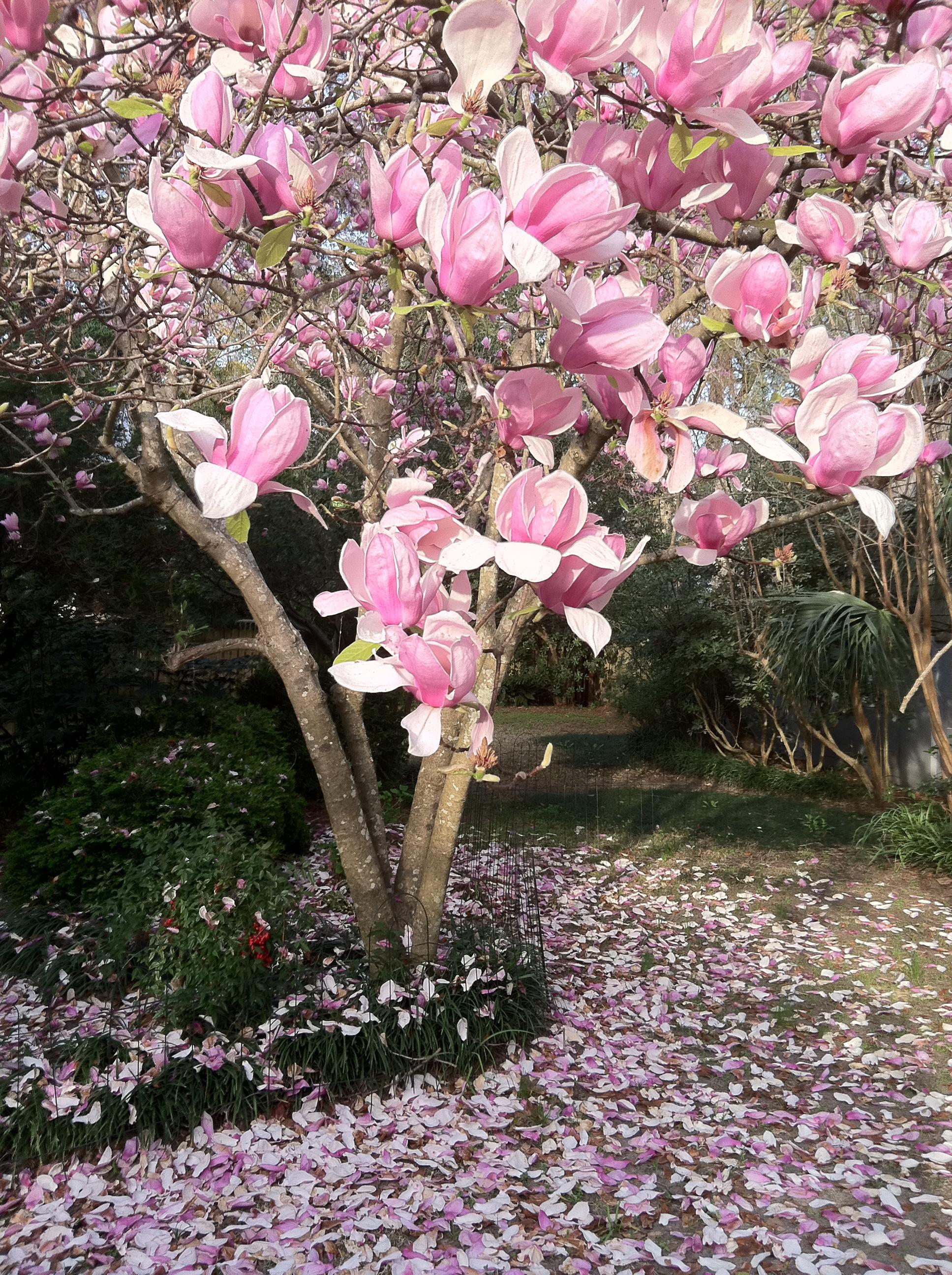 Spring In Charleston Sc Charleston Through An Artists Eye