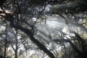 Trees, Edisto Island, SC©'10 Charlotte Hutson Wrenn