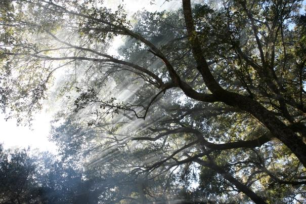 Trees. Edisto Island, SC ©2012 CHutsonWrenn