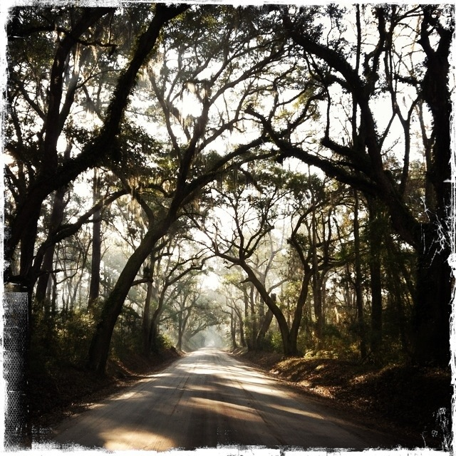 Edisto Island Charleston South Carolina